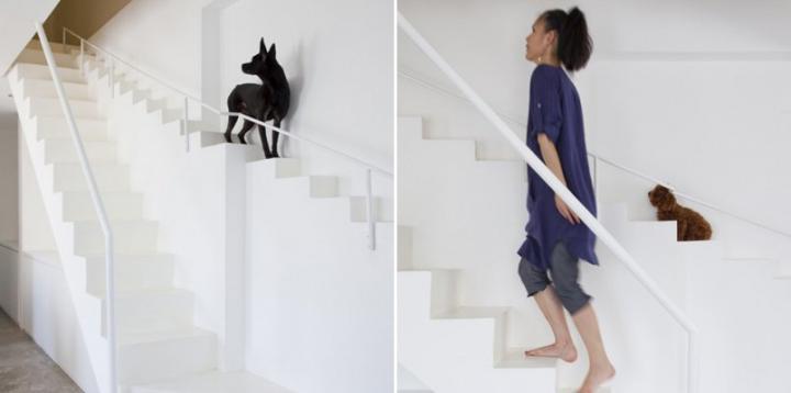 Curiosidades sobre la decoraci n del hogar noticias - Escaleras para perros ...