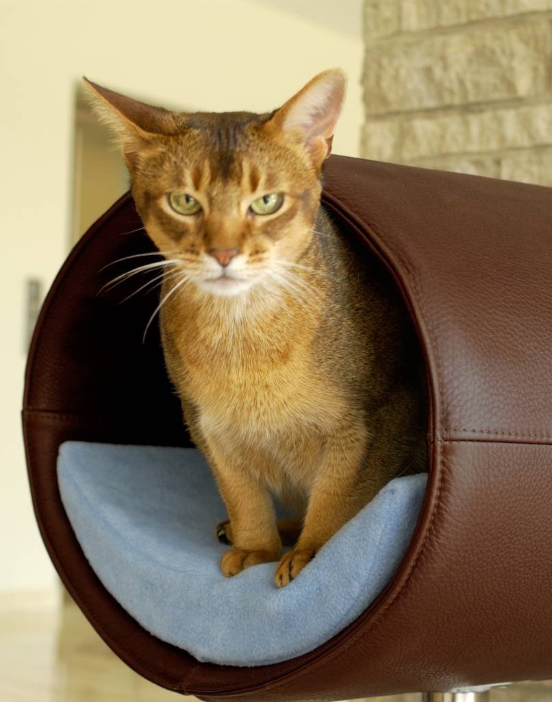 Camas de dise o para mascotas decoraci n del hogar for Cama para gatos