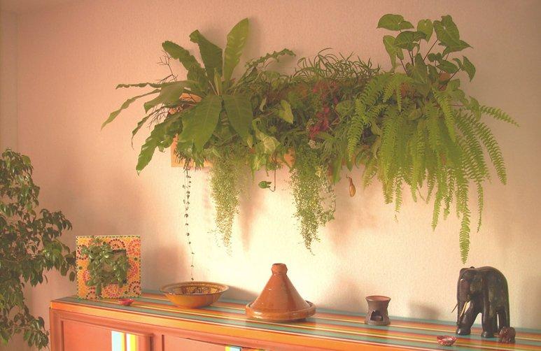 Wallflower cuadros vegetales decoraci n del hogar for Decoracion del hogar con plantas