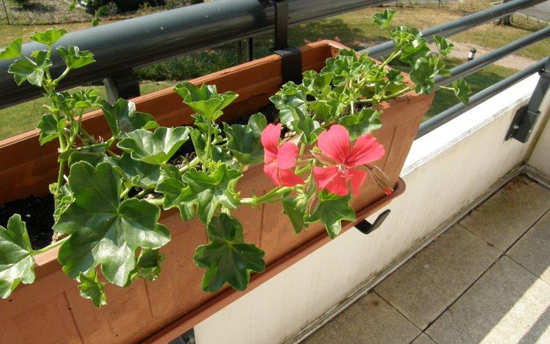 Crea un jard n en tu terraza decoraci n del hogar for Ideas para hacer una terraza