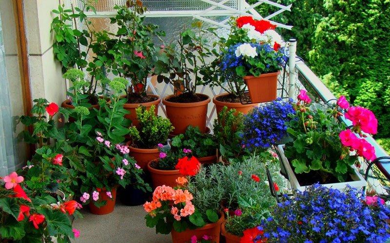 Crea un jard n urbano en 4 etapas decoraci n del hogar Como organizar mi jardin