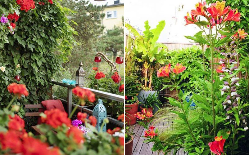 Crea un jard n urbano en 4 etapas decoraci n del hogar - Plantas para terraza con mucho sol ...
