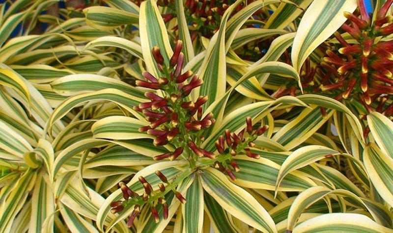 Plantas de interior decoraci n del hogar for Que es exterior y interior