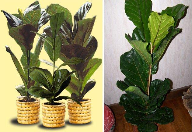 Plantas de interior decoraci n del hogar - Plantas de hojas grandes y verdes de exterior ...