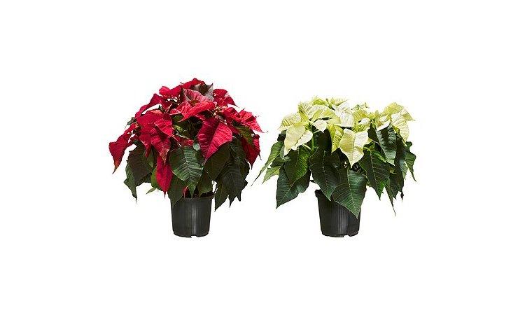 ikea plantas awesome los cactus son unas plantas bastante fciles de cuidar pues requieren poco. Black Bedroom Furniture Sets. Home Design Ideas