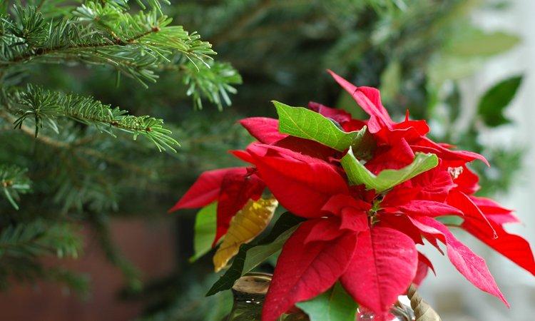 Plantas navide as en ikea decoraci n del hogar for Casa clasica japonesa