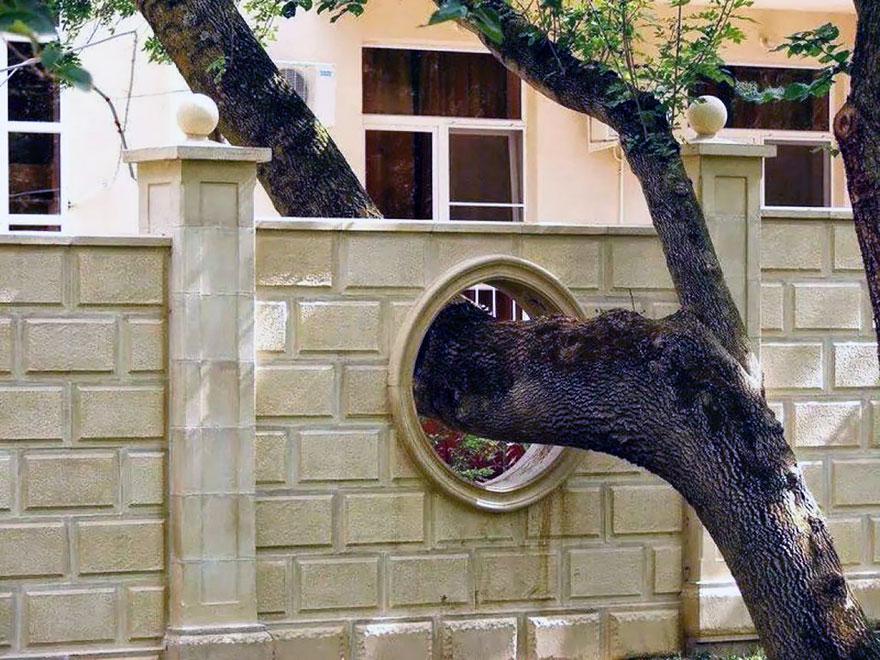 Arquitectos que no quisieron cortar arboles (12)
