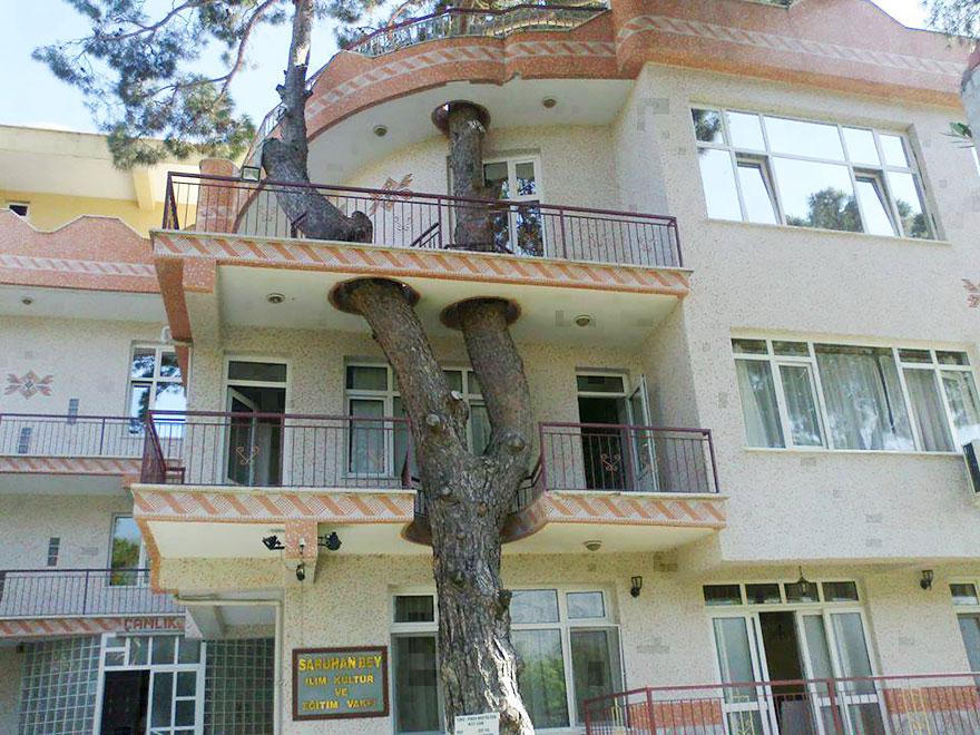 Arquitectos que no quisieron cortar arboles (8)