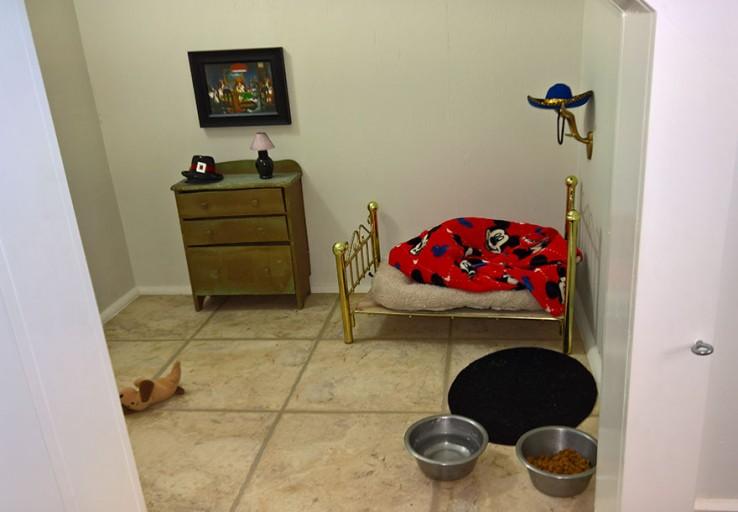 una-pequena-habitacion-para-el-chihuahua-1