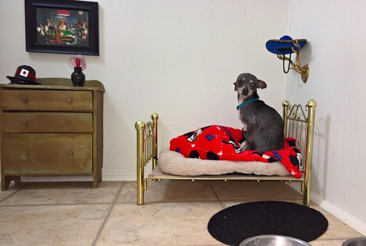 Una pequeña habitación para el chihuahua